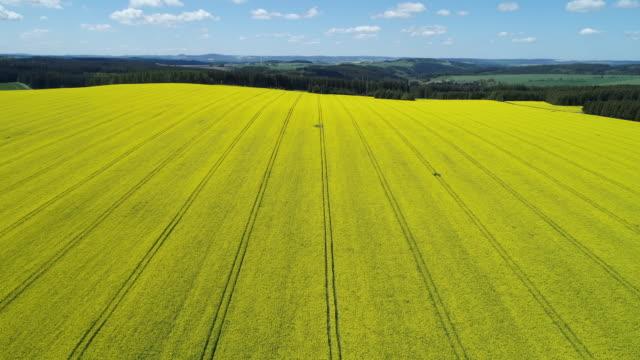 Aerial view of oilseed rape field in bloom, springtime. Saale-Orla-Kreis, Schleiz, Thuringia, Germany, Europe.
