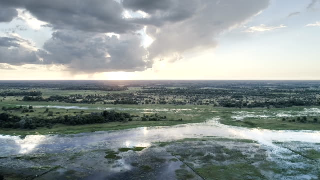 aerial view of okavango swamp - nature reserve stock videos & royalty-free footage
