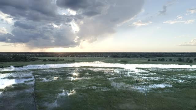 vidéos et rushes de vue aérienne des marais de l'okavango - marécage