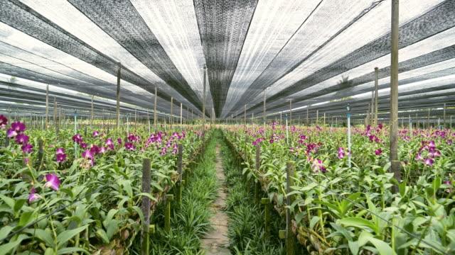 vídeos y material grabado en eventos de stock de vista aérea del jardín de orquídeas orgánicas. - guantes de protección