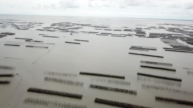 vídeos de stock, filmes e b-roll de vista aérea da fazenda de ostras no mar - vazante