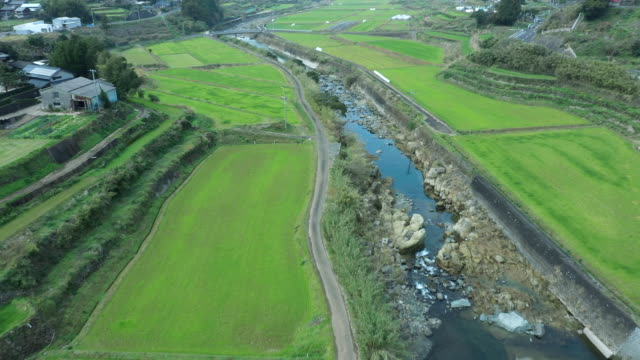 aerial view of paddy field and river - helicopter point of view stock videos & royalty-free footage