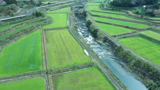 aerial view of paddy field and river - cultures stock videos & royalty-free footage
