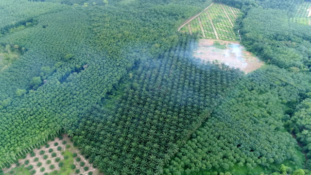 aerial view of palm oil plantation - plantation stock videos & royalty-free footage