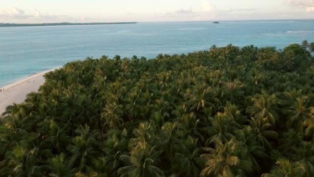 vidéos et rushes de vue aérienne (drone) de palmiers sur une île tropicale - partie d'une série
