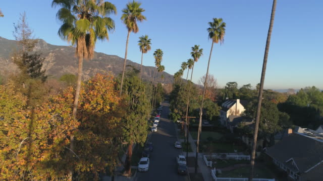 aerial view of palm trees over residential houses in Pasadena CA