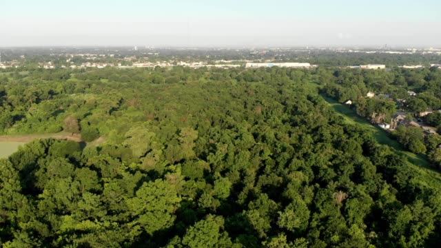 aerial view of park trees in terrytown louisiana - louisiana stock-videos und b-roll-filmmaterial