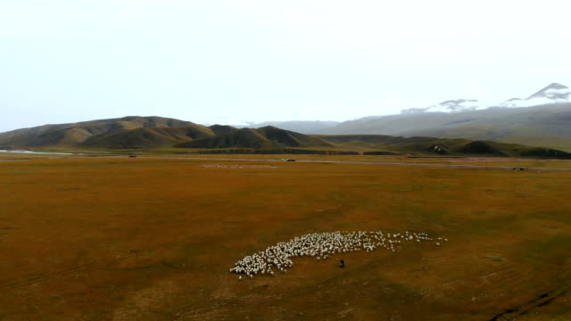 aerial view of pasture beside duku highway in xinjiang - remote location video stock e b–roll