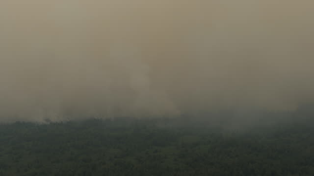 aerial view of peatland and forest fires during fire patrol by indonesian national board for disaster management on september 14 2019 in central... - kalimantan stock videos and b-roll footage