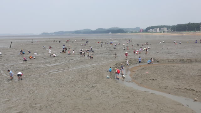 aerial view of people collecting sea creatures at gungpyeonghang harbor mud flat (popular tourist desitination) - mud flat stock videos & royalty-free footage