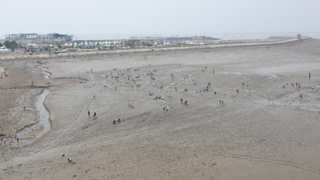 aerial view of people collection sea creatures at gungpyeonghang harbor mud flat (popular tourist desitination) - mud flat stock videos & royalty-free footage
