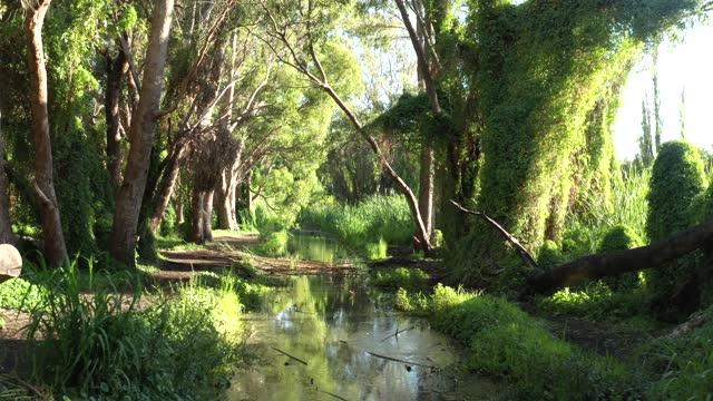 vídeos de stock e filmes b-roll de aerial view of perth secret garden, western australia - drone 4k video - beauty in nature