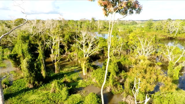 aerial view of peruvian amazon and jungle - tree canopy stock videos and b-roll footage