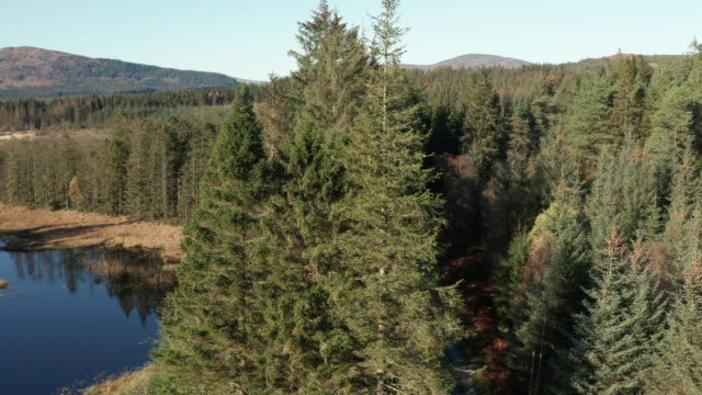 aerial view of pine forest and a slow moving river in rural dumfries and galloway captured in early autumn - galloway scotland stock videos & royalty-free footage