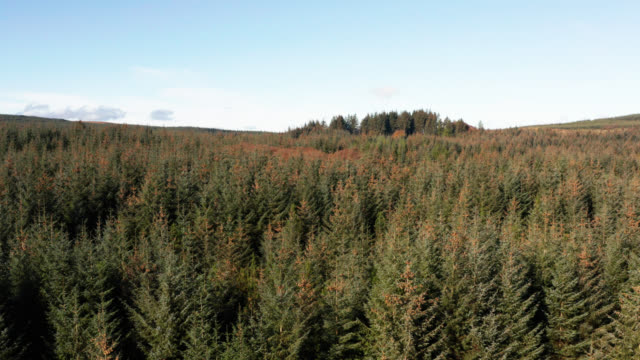 aerial view of pine forest in dumfries and galloway - galloway scotland stock videos & royalty-free footage
