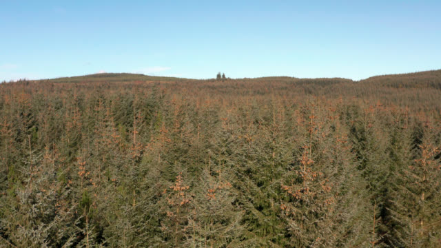 aerial view of pine forest in dumfries and galloway - pine stock videos & royalty-free footage
