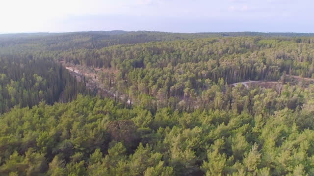 aerial view of pine forest,  judean foothills - israel stock videos & royalty-free footage