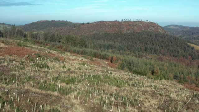 aerial view of pine forest with a section of newly plated trees in dumfries and galloway - new stock videos & royalty-free footage