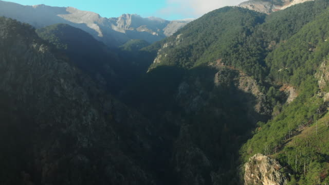 aerial view of pine tree forest and mountain in the morning - area selvatica video stock e b–roll