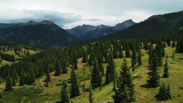 vídeos de stock e filmes b-roll de aerial view of pine trees and mountains against sky - choupo tremedor