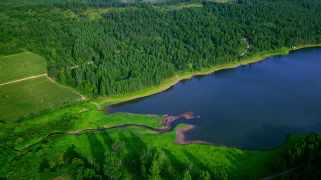 aerial view of pine trees forest - nature reserve stock videos & royalty-free footage