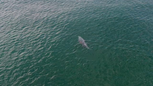 aerial view of pink dolphins at khanom, nakhon si thammarat province, south of thailand - delfino video stock e b–roll