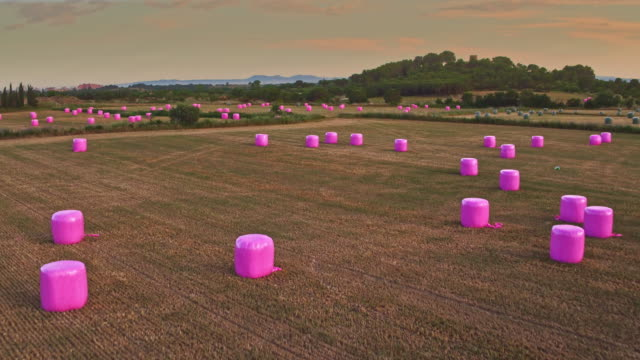 aerial view of pink haybales on a harvested field - hay stock videos and b-roll footage