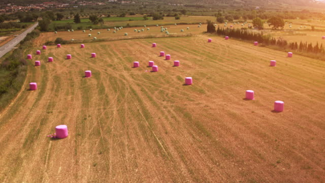 aerial view of pink haybales on a harvested field - bale stock videos and b-roll footage