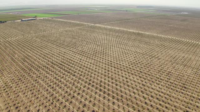 カリフォルニア州のピスタチオ農地の空中写真 - ピスタチオナッツ点の映像素材/bロール