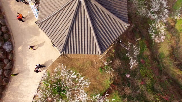 stockvideo's en b-roll-footage met aerial view of plum blossom hill at maehwa village (tourist attraction for plum blossoms) and a gazebo - gazebo