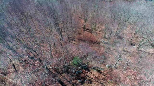Luftaufnahme der Pocono Mountains, Appalachen, in späten sonnigen Herbsttag