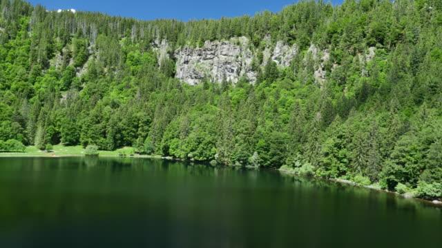 森林池塘鳥瞰圖 - 10秒或更長 個影片檔及 b 捲影像