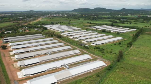 aerial view of poultry farm - pollo video stock e b–roll