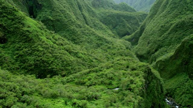 vídeos de stock e filmes b-roll de aerial view of rainforest and valley maui usa - povo polinésio