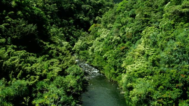 aerial view of rainforest valley river maui hawaii - hawaii inselgruppe stock-videos und b-roll-filmmaterial