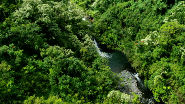 aerial view of rainforest valley river maui hawaii - hawaii inselgruppe stock-videos und b-roll-filmmaterial