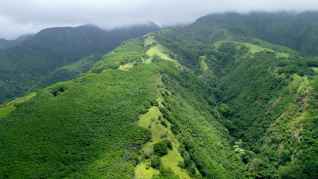 aerial view of rainforest valley vegetation maui usa - hawaii inselgruppe stock-videos und b-roll-filmmaterial