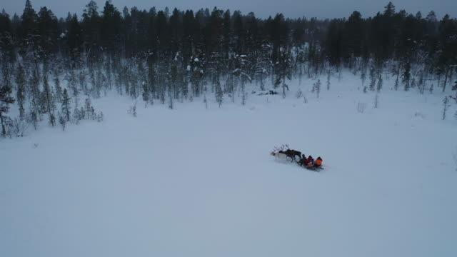 vídeos y material grabado en eventos de stock de vista aérea de reindeer sledding en profundo bosque de nieve en la temporada de invierno - pinar