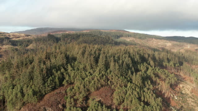 aerial view of remote area of rural dumfries and galloway with pine forest growing on a hillside - galloway scotland stock videos & royalty-free footage