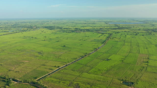 aerial view of rice field in day time - cambodia stock videos and b-roll footage