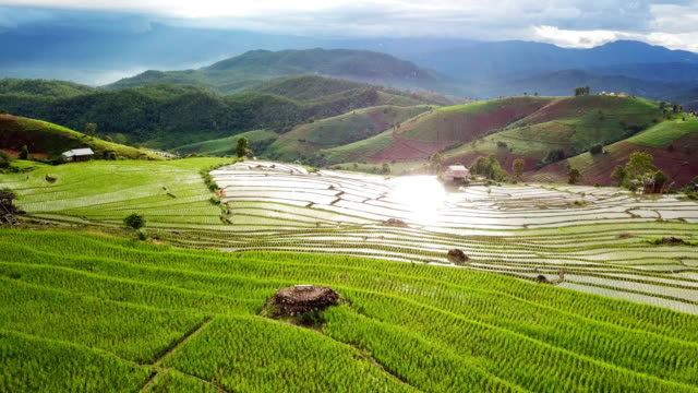 aerial view of rice field terraces panoramic on hillside , agriculture of southeast asia - patio stock videos & royalty-free footage