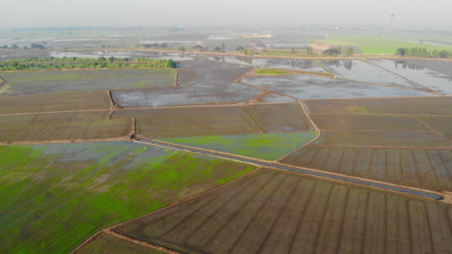 aerial view of rice field - torrential rain stock videos and b-roll footage