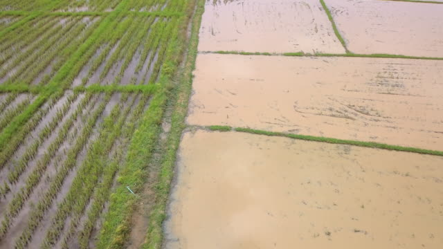 aerial view of rice field - textile patch stock videos & royalty-free footage