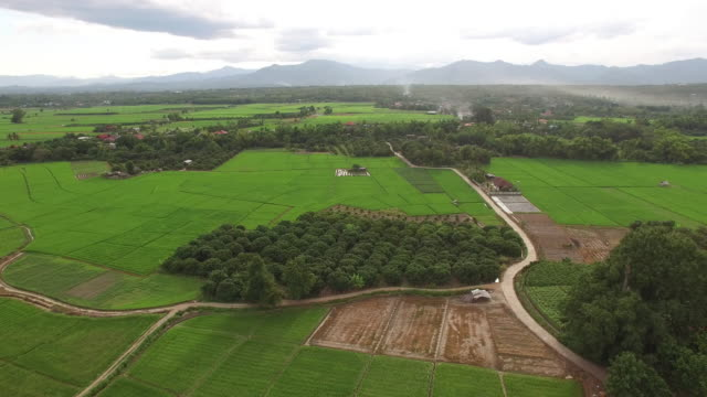aerial view of rice fields country side of thailand - enacting stock videos & royalty-free footage