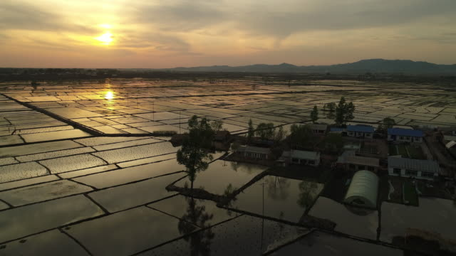 aerial view of rice fields on may 16 2017 in wuchang heilongjiang province china wuchang is a major rice growing area in northern china - einzelner senior stock-videos und b-roll-filmmaterial