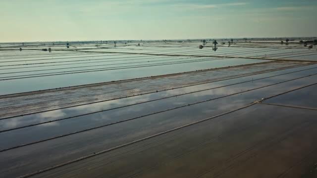 stockvideo's en b-roll-footage met luchtfoto van paddy rijstvelden - verwonderingsdrang