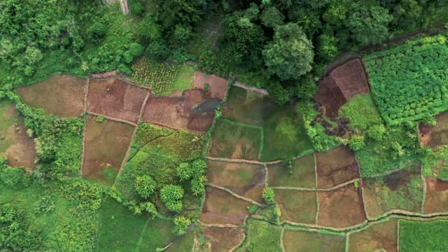 aerial view of rice plantation in malawi, africa - africa stock videos & royalty-free footage