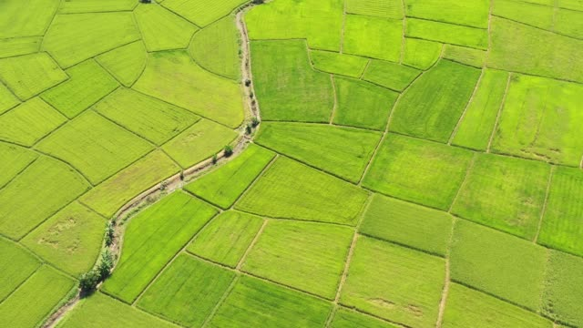 Aerial view of rice terrace. Directly above view of agriculture area