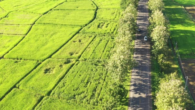 Aerial view of rice terrace. drone point of view of agriculture area