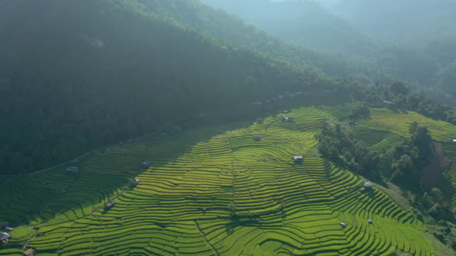 aerial view of rice terrace - luzon stock videos & royalty-free footage